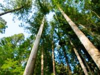 画・2016年木造マンション建設ラッシュか 放置人工林対策も
