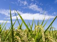 画・食糧自給率の目標を引き下け_-助成型農業から「稼く_農業」へ