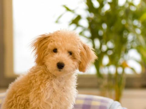 ペット保険、契約急増のワケ 犬の飼育頭数は減少