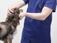 画・ペットにも先端医療を 富士フイルムとアニコムが動物向け先端医療技術開発で業務提携