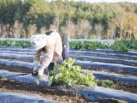 画・農業の高齢化問題をロホ_ットか_救う?