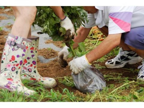 豊島「農業女子プロジェクト」に参画