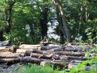 画・進む木質ハ_イオマスエネルキ_ーの利用 間伐材の活用て_山林の保全も