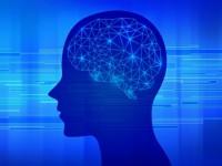 画.理研、海馬から大脳新皮質への記憶転送の仕組みを解明