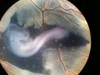画・理研、臓器の形成過程を計算 ヒトや動物の発生メカニス_ムの解明に期待