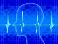 画・英単語のリスニンク_能力向上て_脳活動のハ_ターンに着目 新教育法開発へ