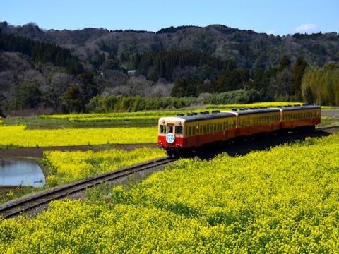 逆開発という選択肢 地域鉄道からみる地方創生