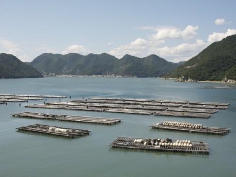 日本近海のマイクロプラスチックは世界の27倍! 民間企業の取り組みが海を救う?