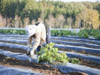 画・福島産農産物、価格低迷続く。安全性に不安イメージ払拭できず。