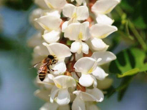 ローヤルゼリーが肌の筋肉を若くする? 世界でも注目されるミツバチのチカラ