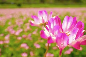 果物王国「岡山」の知られざる魅力! 希少なれんげ米からジーンズまで、岡山の魅力を再発見