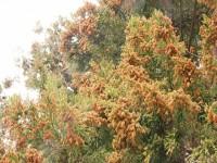 画・花粉症で「ひきこもり」5割超。有効な対策は室内での花粉対策。
