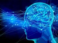 画・「空気読めない」は脳回路によって決まる。理研が回路特定。