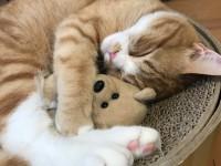 画・ペット産業、イヌは苦戦、ネコは好調。室内飼育増加によりケア用品が成長。