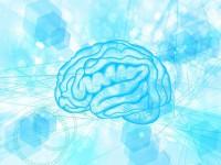 画・光で認知症を改善。光酵素で神経伝達効率の強化に成功~生理学研究所。